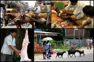 Scenes in Bagdogra and a horse-drawn cart in Delhi