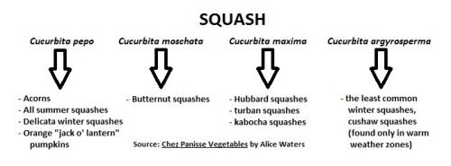 Squash Species