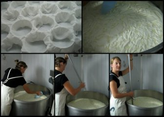 Murielle Burgat cutting curds