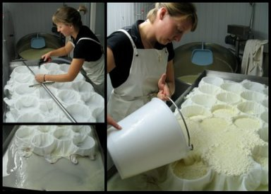Murielle Burgat pouring the curds into molds