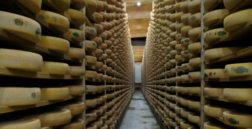 Comté aging at Fromageries Marcel Petite