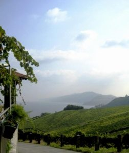 Ameztoi vineyard offers salty breezes and a gorgeous ocean view