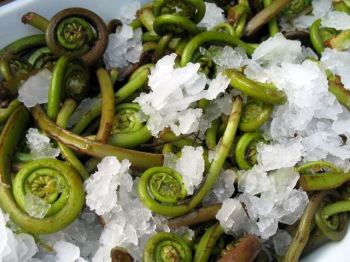 Local Fiddleheads