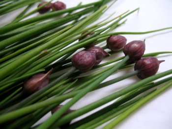 Local Chives