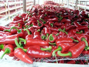 Piment d'Espelette AOC Peppers