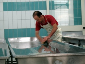 Cleaning the Evening Milk Troughs with Parmigiano Reggiano Whey
