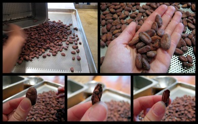 Mast Brothers - Removing Damaged Cacao Beans