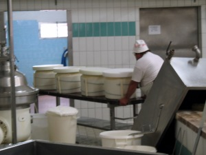 Parmigiano Reggiano Curds Just Put in Molds