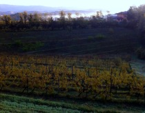 I Clivi Vineyard