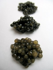 Siberian, White Sturgeon and Prime Osetra Galilee Caviar