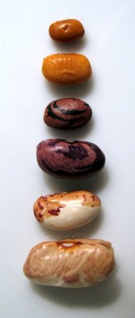 Heirloom Beans from Rancho Gordo - Before and After Soaking