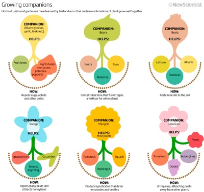 Growing Comparison Diagram - New Scientist