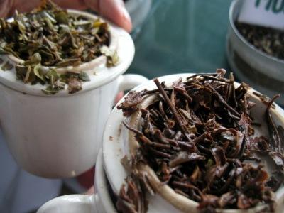 Darjeeling Teas