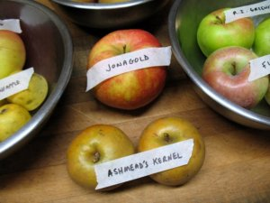 Jonagold and Ashmead's Kernel apples