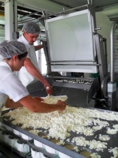 Packing Harbison Curds into Molds