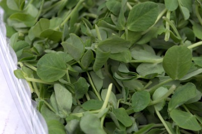 Organic Pea Greens from Allen Farms (Westport, MA)