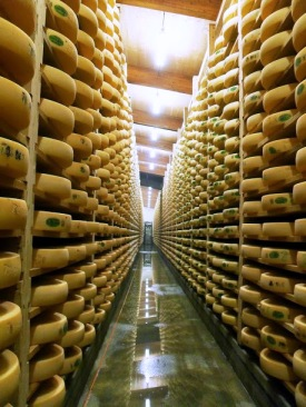 Rows of Comté at Marcel Petite's Fort Saint Antoine
