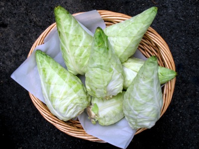 Organic Arrowhead Cabbage from Red Fire Farm