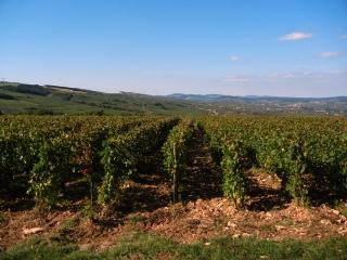 Château des Rontets Vineyard