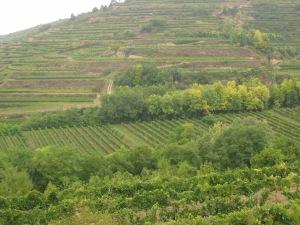 Schloss Gobelsburger Vineyards