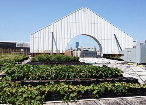 Higher Ground Rooftop Farm